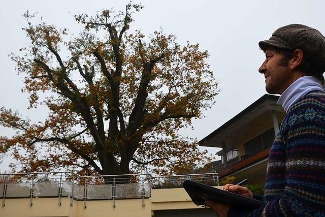 Unterwegs mit einem Baumkontrolleur in Gundelfingen