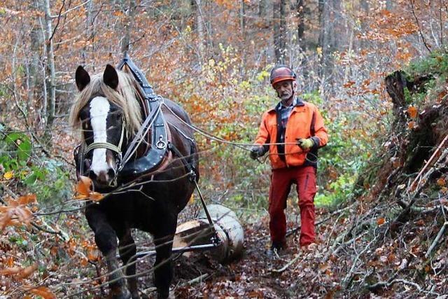 Wiehernde Waldarbeiter schützen Bodendenkmäler in Fahrnau