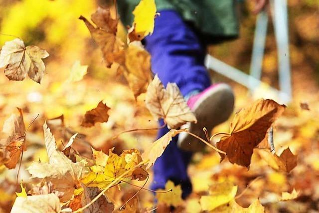 Wohin nur mit dem Herbstlaub?