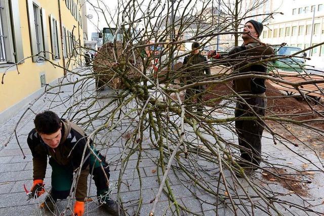 Sieben neue Bäume für den Rotteckring in Freiburg