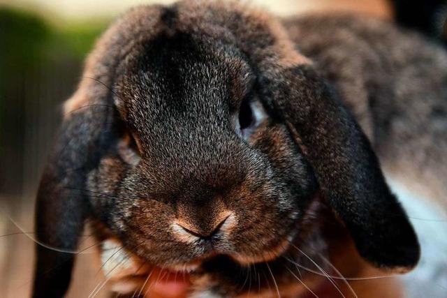 Fünf Kaninchenzüchter wollen ihren Verein nicht aufgeben