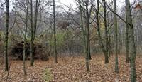 Ein kleines bisschen Wald