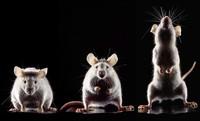 Von Menschen und Mäusen