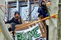 Aktivisten klettern in Platane auf dem Platz der Alten Synagoge