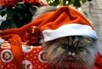 Fotos: BZ-Leser schicken tierische Nikolaus-Bilder