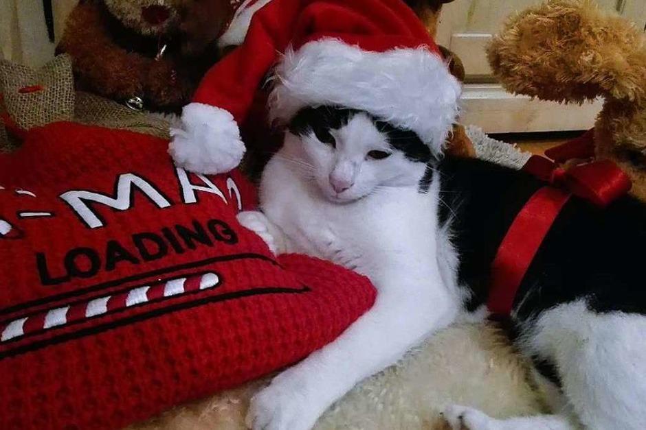 Katze Lilly ersetzt für Nina Hartmann (12 Jahre) den Nikolaus. Denn der kommt nicht mehr vorbei, schreibt die Mama dazu. (Foto: Nina Hartmann )