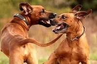 Aggressive Hunde werden in Weil am Rhein zum Problem
