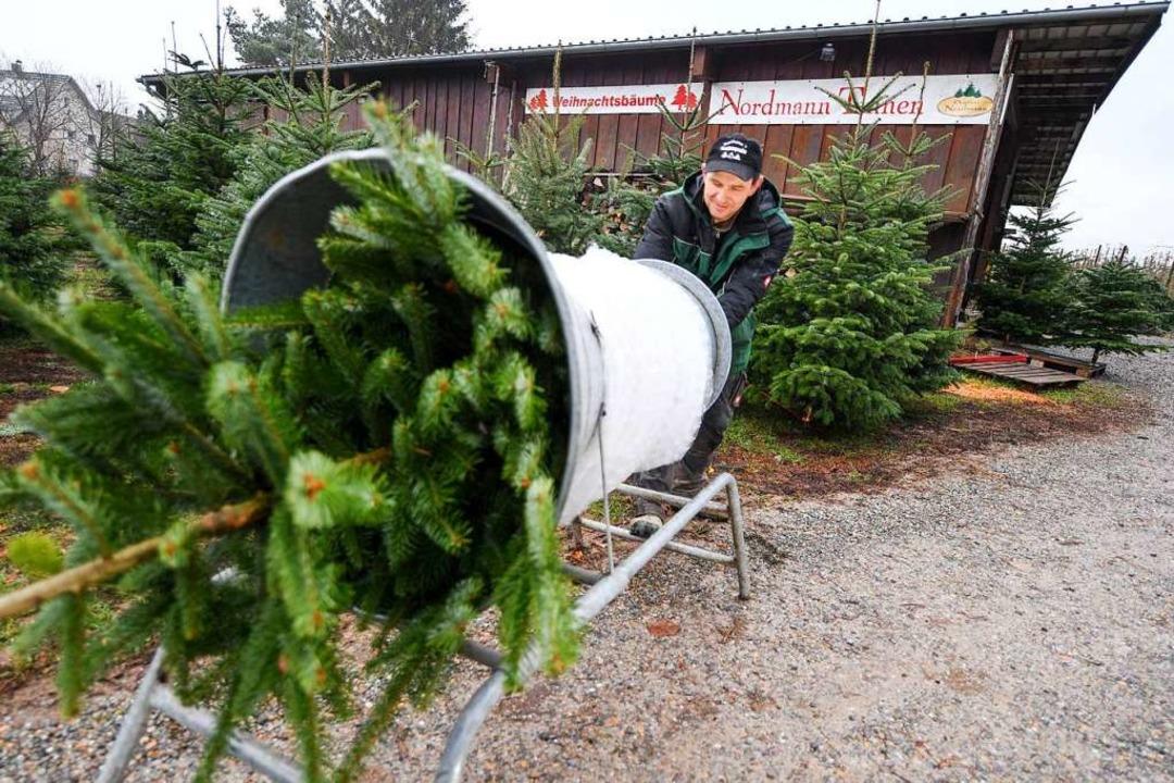 Weihnachtsbaumzüchter Herbert Baumann ...den Verkauf transportiert werden kann.  | Foto: dpa