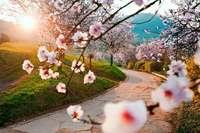 Erleben Sie die Blütenpracht der Mandelblüte in der Pfalz