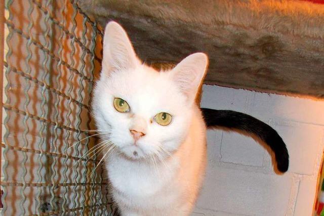 Unbekannter schießt in Lörrach auf Katze – sie stirbt wohl an den Folgen