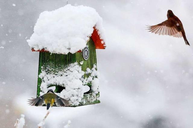 Wie man Vögel im Winter richtig füttert
