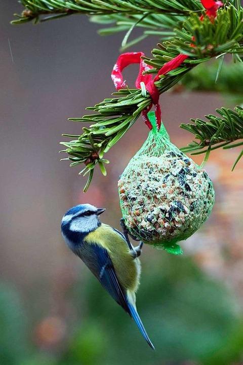 In Meisenknödel können sich Vögel verfangen.  | Foto: dpa-tmn