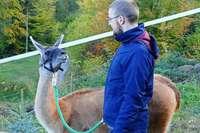 Zu Besuch bei den Schauinsland-Lamas in Horben