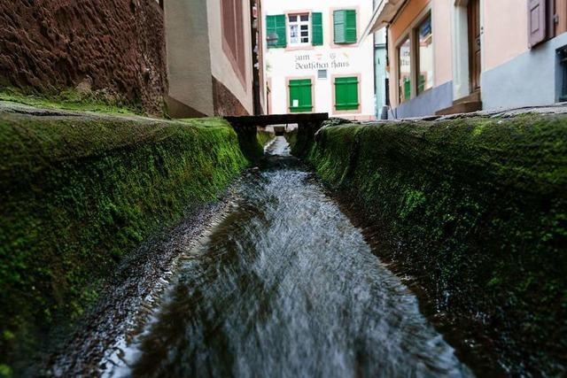 Sind Freiburgs Bächle wegen der Trockenheit dauerhaft in Gefahr?