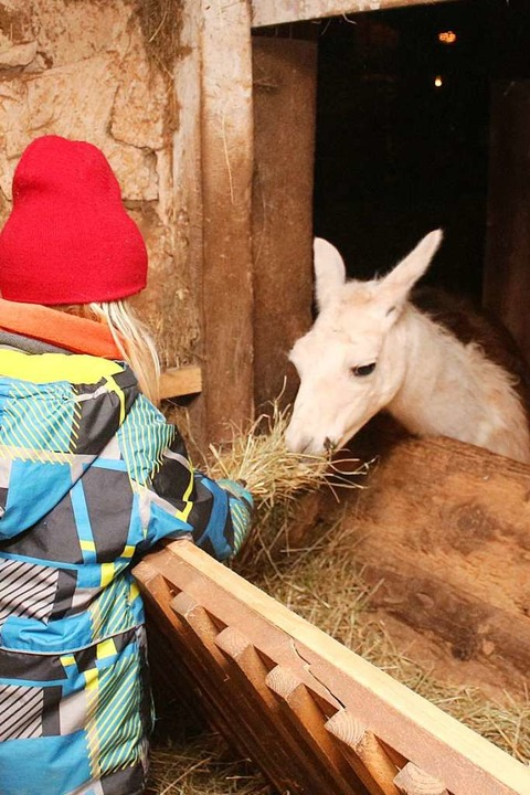Zarte Bande zum Lama knüpfen.    Foto: Anja Bertsch