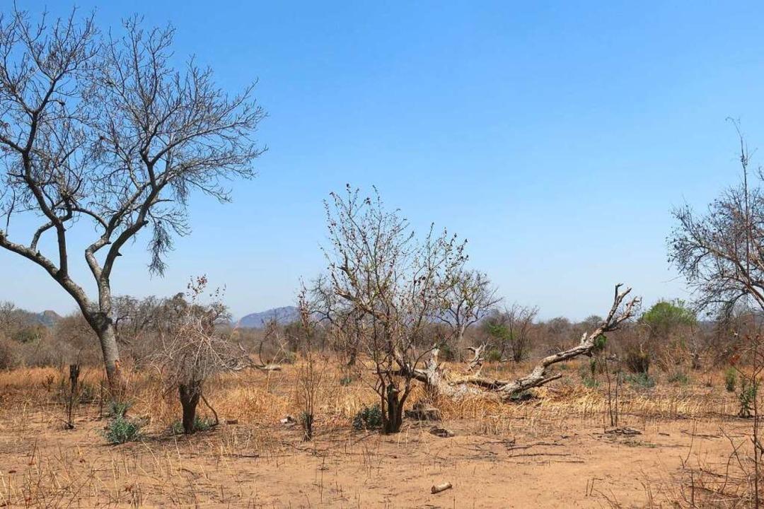 Dürre ist eine der Folgen des Klimawan...es Stück Land in Malawi, Südostafrika.  | Foto: dpa