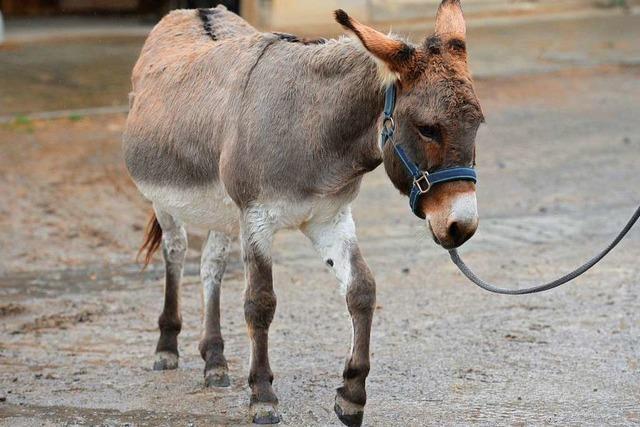 Der Tierarzt, der nur Esel behandelt
