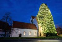 Mammut-Weihnachtsbaum
