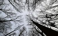 Trockenheit setzt dem Wald zu