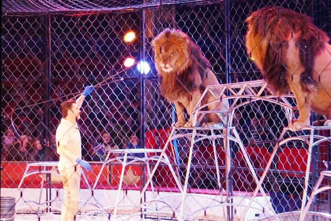 Raubtier-Trainer Alexander Lacey demon...t die Arbeit mit seinen Löwen (links).  | Foto: Christine Storck-Haupt