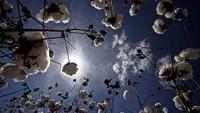 Bio-Baumwolle ist groß im Kommen