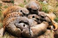 Die einen hoch oben, die anderen im Knäuel – so schlafen Tiere