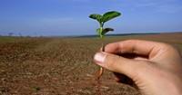 Gensoja-Anbau in Brasilien: Probleme, Hintergründe und Lösungsansätze