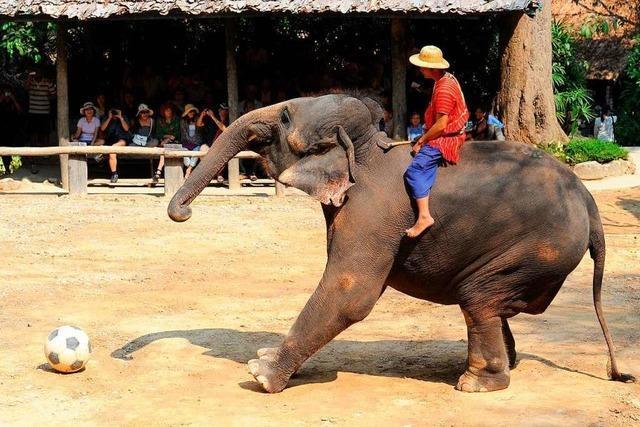Reisen mit Verantwortung: Darf man noch auf Elefanten reiten?