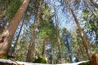 Die Forstbezirke im Landkreis Breisgau-Hochschwarzwald werden neu zugeschnitten