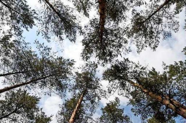 Außenstelle in Kirchzarten wird Opfer der Forstreform