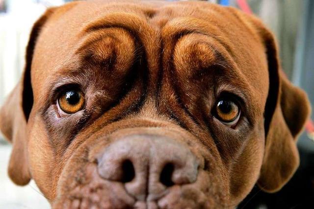 Streit um Hundesteuer in Görwihl wird verbissen weitergeführt