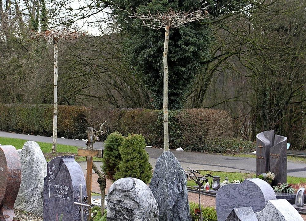 Auf dem Wehrer Friedhof wurden für ein...Gesamtbild acht neue Bäume gepflanzt.   | Foto: Hansjörg Bader