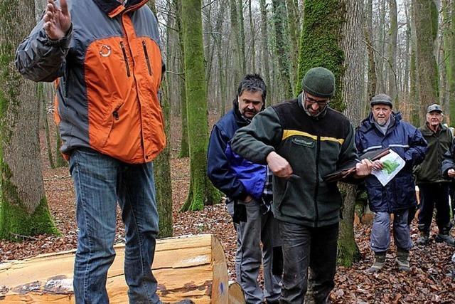 Die nächste Holzauktion ist in Mappach
