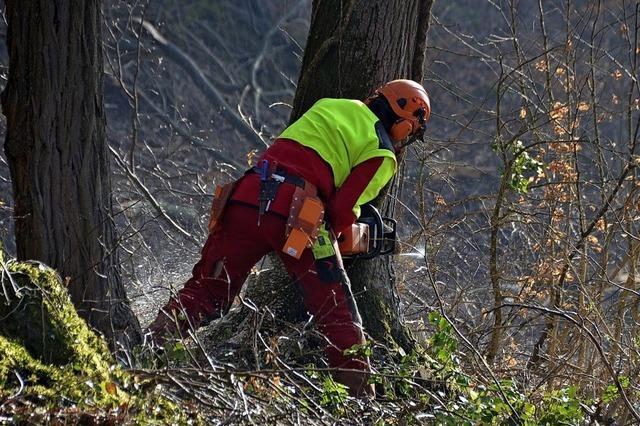 Schlechtes Wetter für die Waldarbeit