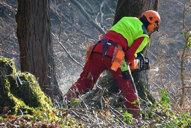 Das Jahr geht im Gemeindewald von Grenzach-Wyhlen nicht gut los