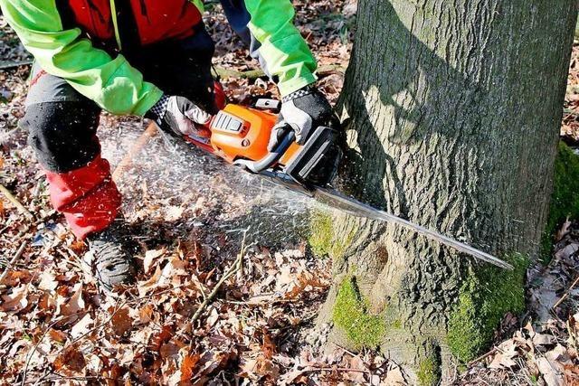 35 Bäume werden auf dem Alten Friedhof gefällt