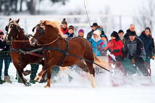 500 Zuschauer beim Pferdeschlittenrennen in St. Märgen