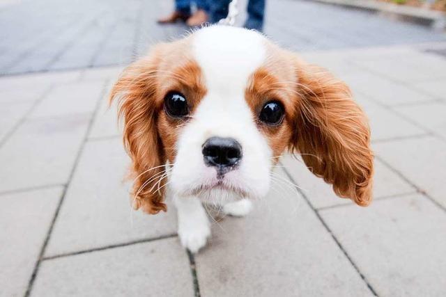 Freilaufender Hund soll Unfall verursacht haben
