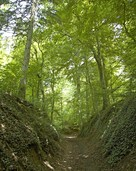 """""""Der Wald wird nie barrierefrei"""""""