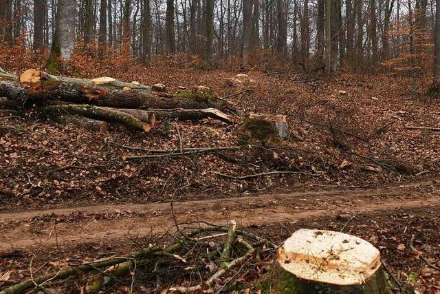 Streit um den Eichenwald: Stadt widerspricht Raubbau-Vorwürfen