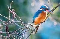 Die Eisvögel sind wieder im Basler Zoo gelandet