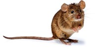 Maus an Bord sorgt für Verspätung