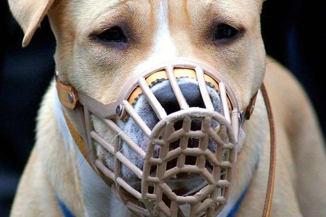 Gemeinde Bahlingen will bissigen Hund beschlagnahmen