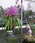 Exotische Pflanzenschönheiten im Stadtpark Lahr