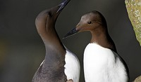 20 000 tote Vögel an den Strand gespült