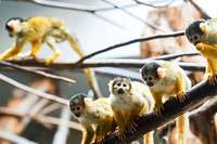 Totenkopfäffchen verbringen den Winter im Basler Zoo