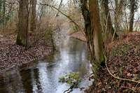 Endet der Streit um den Hochwasserschutz am Oberrhein?