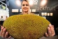 Der Biomarkt wächst