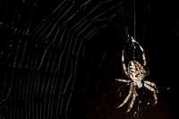 Warum kleben Spinnen nicht am eigenen Netz fest?