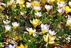 Fotos: Leser fotografieren den frühen Frühling in Lahr